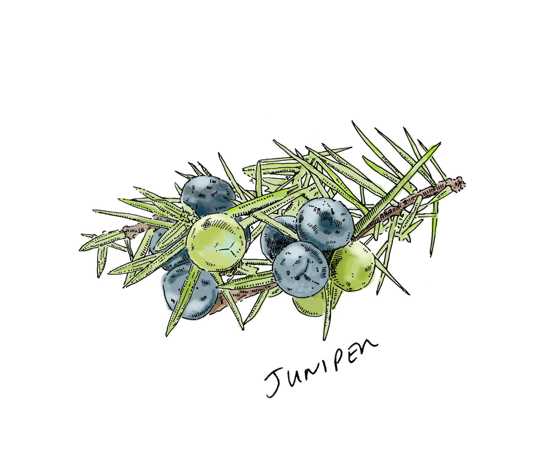 Lussa Gin Juniper Illustration